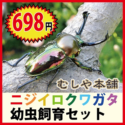 クワガタ 値段 ニジイロ
